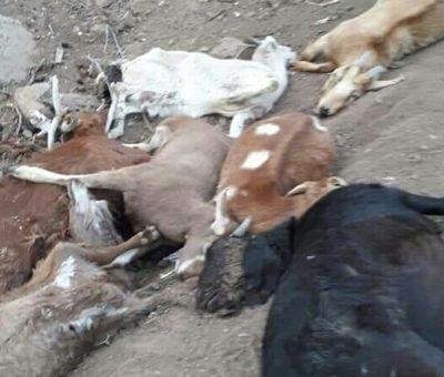 Más de 5.000 animales han muerto por la sequía en Putaendo