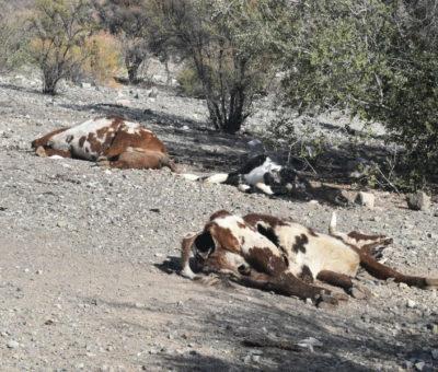 Alcalde de Calle Larga llama al Gobierno a declarar Aconcagua Zona de Catástrofe por Sequía