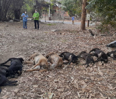 Municipio de Calle Larga presenta Querella Criminal por masivo envenenamiento y matanza de Perros
