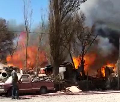 Más de 200 animales de granja murieron en incendio forestal en sector de Parrasía en San Felipe
